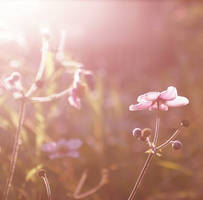 sunlight in my mind by ssilence