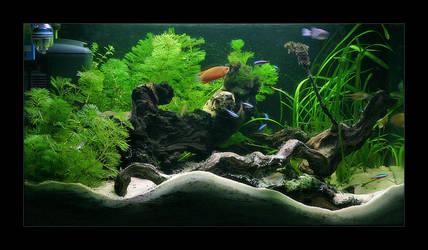 My Aquarium by ssilence