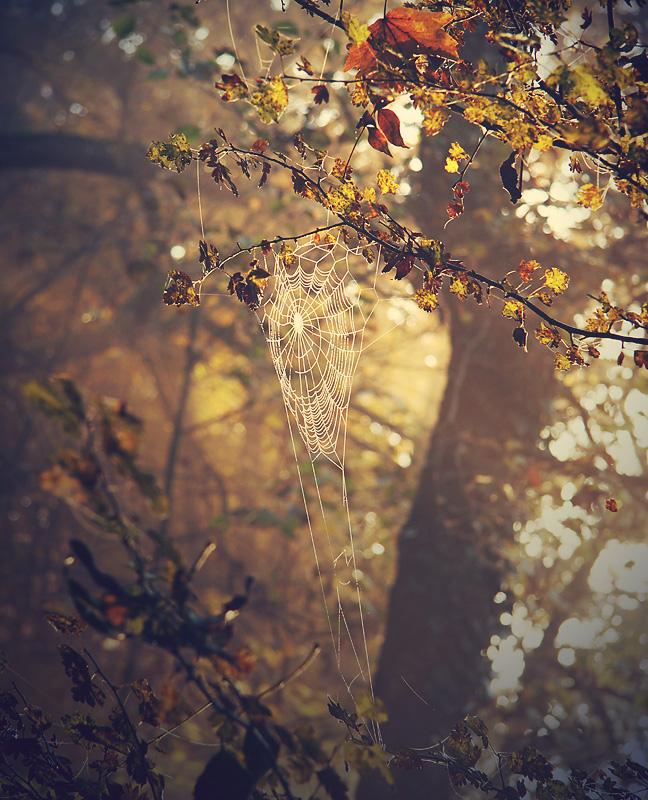 cobweb by ssilence
