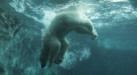 polar bear by ssilence