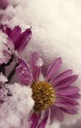 onset of winter