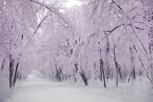 fairys winter
