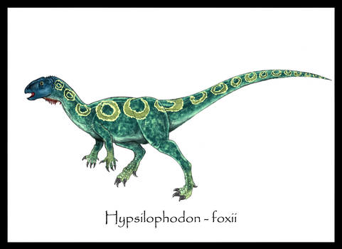 Hypsophodon Foxxi