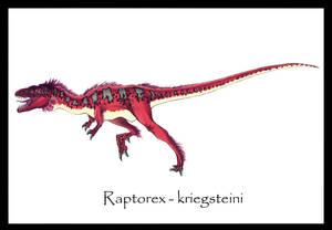 Raptorex kriegsteini