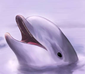 Smiling Dolphin Painting