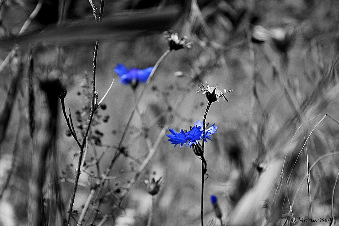 ..:Go Blue II:.. by MonaBe4