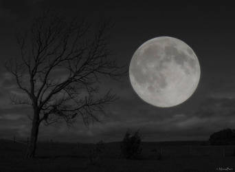 ..:the influence of the Moon:.. by MonaBe4