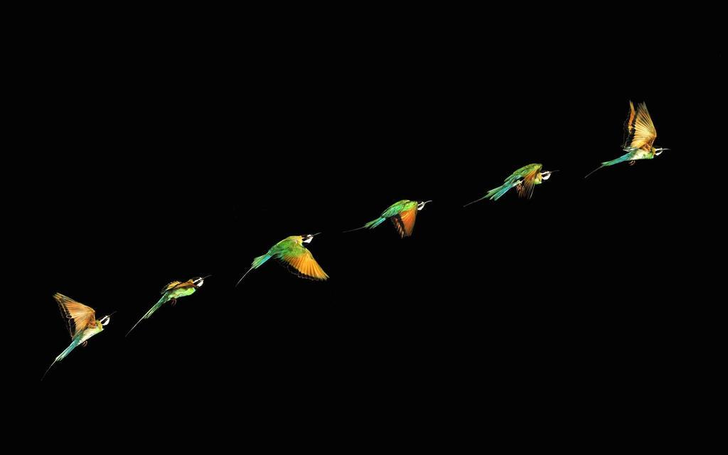 Bee-eater-animal-wallpaper-1920x1200-1882 by DarkEagle2011