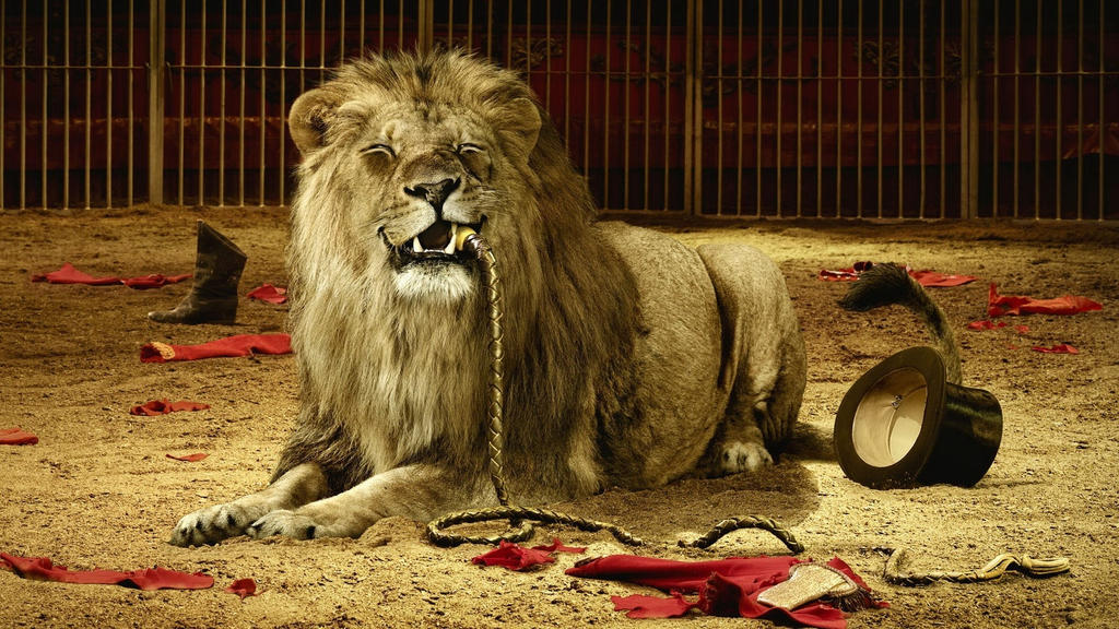 Animal-wallpapers-lion-tamer-ate%20.1920x1080 by DarkEagle2011