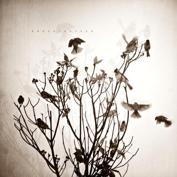 bird002 by lwc71