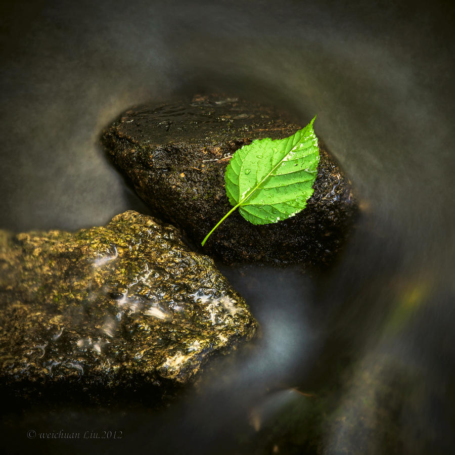 Zen silent leaf know by *lwc71