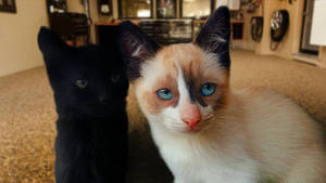 my cats before clawing