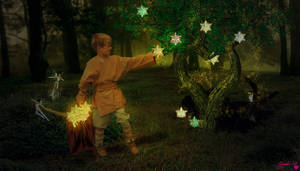 Collector of Magical Stars