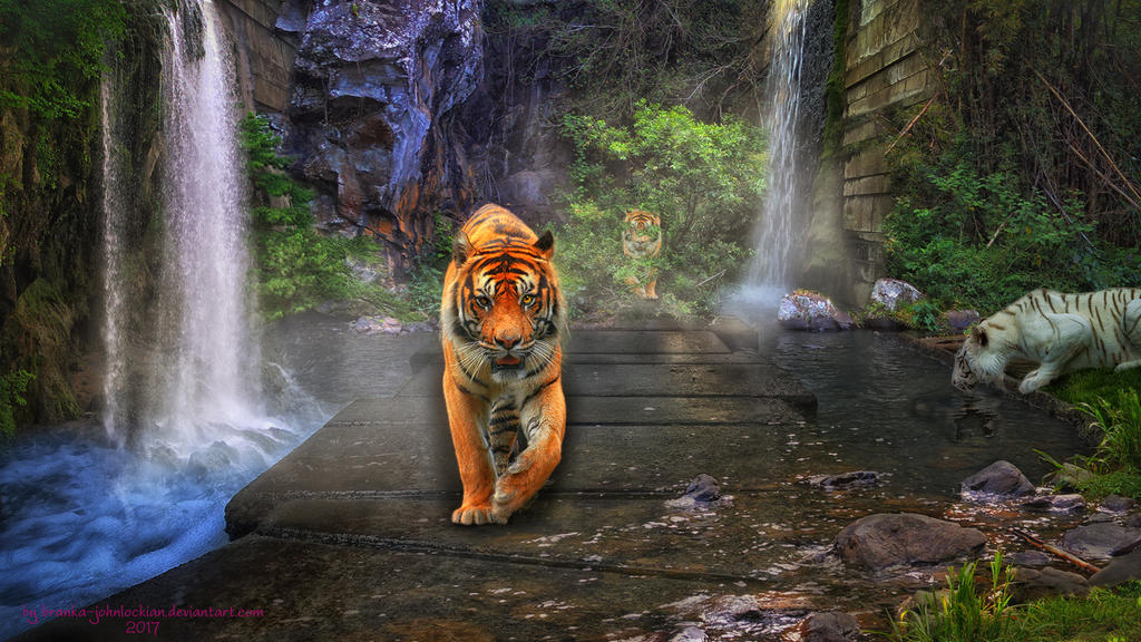 Where Tigers Roam by Branka-Johnlockian
