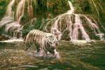 Tigers Love Water