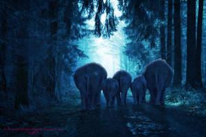 Baby Elephant Walk by BrankaArts