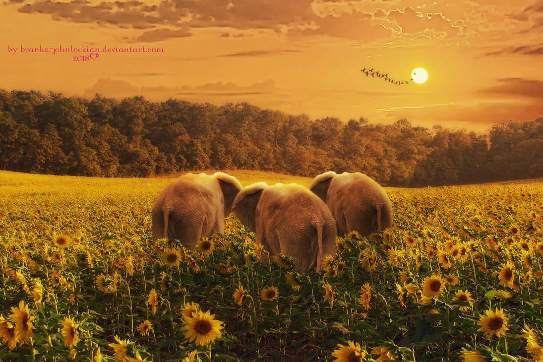 Walking on Sunshine by Branka-Artz