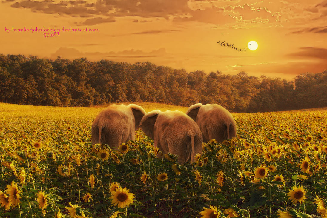 Walking on Sunshine by Branka-Johnlockian