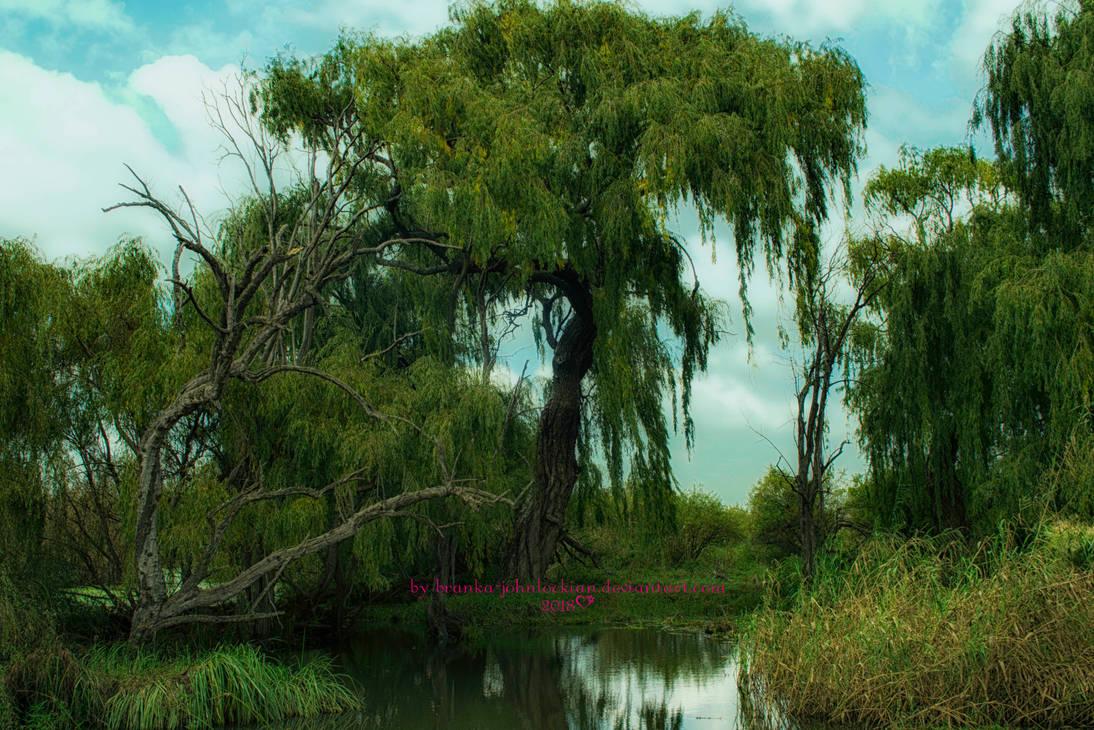 Rietvlei Nature Reserve by Branka-Artz