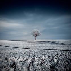 Field by white-white