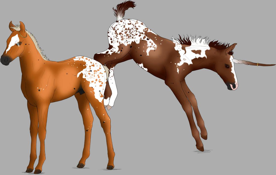 Twin Foals (King George x Aelin)