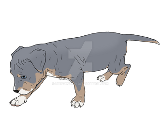 Adoptable: Pit Bull Puppy [OPEN]