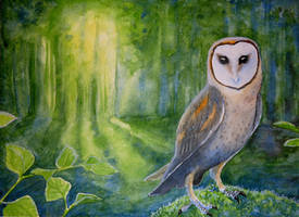 The Woods Alight by Bewildermunster