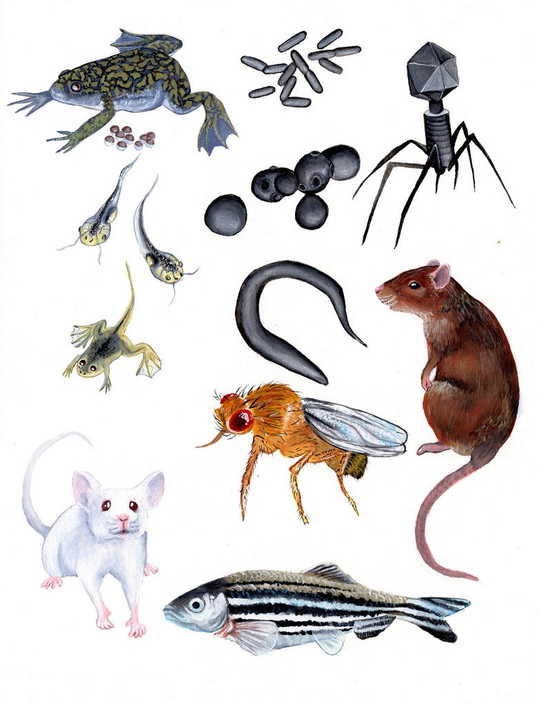 Model Organisms Poster Illustration by Bewildermunster