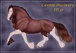 Cavitto Discovery 32