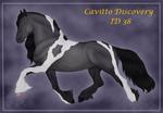 Cavitto Discovery 38