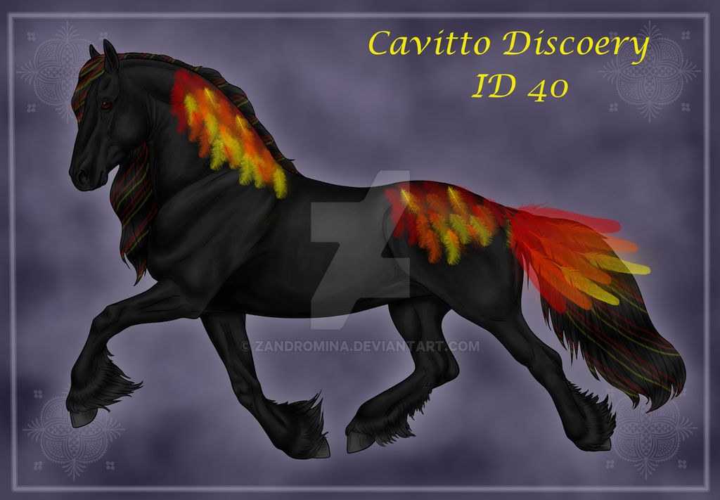 Cavitto Discovery 40