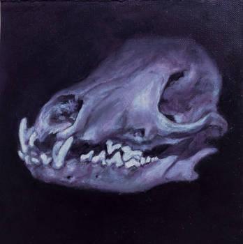 A skull by apiarona