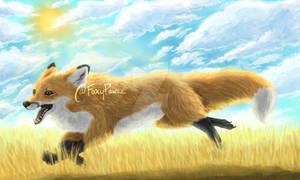 Fox Running in a Golden Field