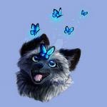 Silver Fox - Butterflies