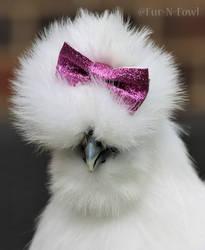 Pretty Silkie by Fur-N-Fowl