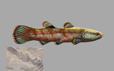 Coelacanthus whitea