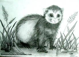 Ferrets by Rinmeothichca
