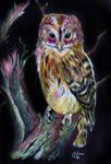 Owl prismacolor
