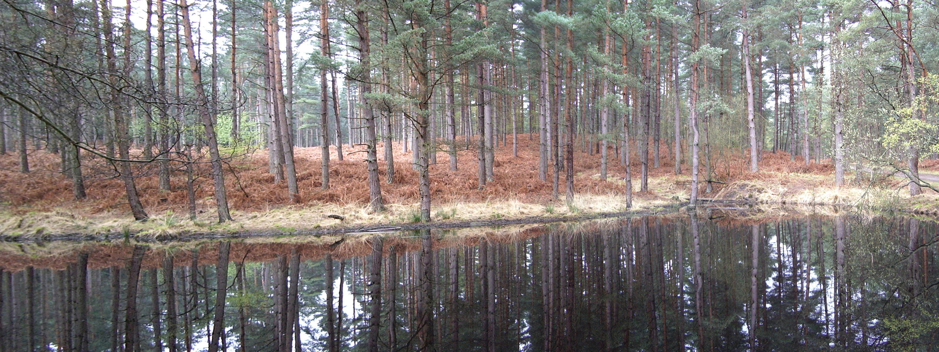 Swinley Forest 1 by asm495
