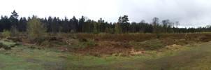 Swinley Forest 2