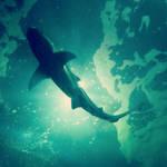 Hunstanton Sealife Sanctuary Shark