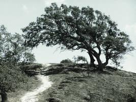 Shade Tree by DailyB