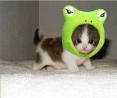 Froggie-Kitty by iCrayola