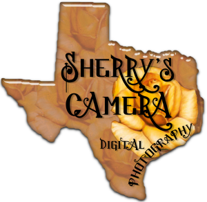 Sherrys-Camera's Profile Picture