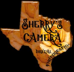 Sherrys-Camera's Profile Picture