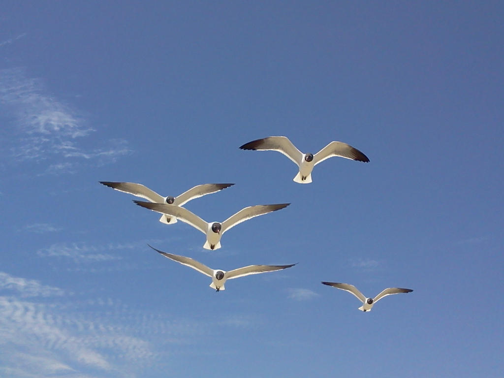 Seagulls 1 by Sherrys-Camera