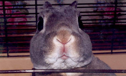 rabbit by whereismycheesecake