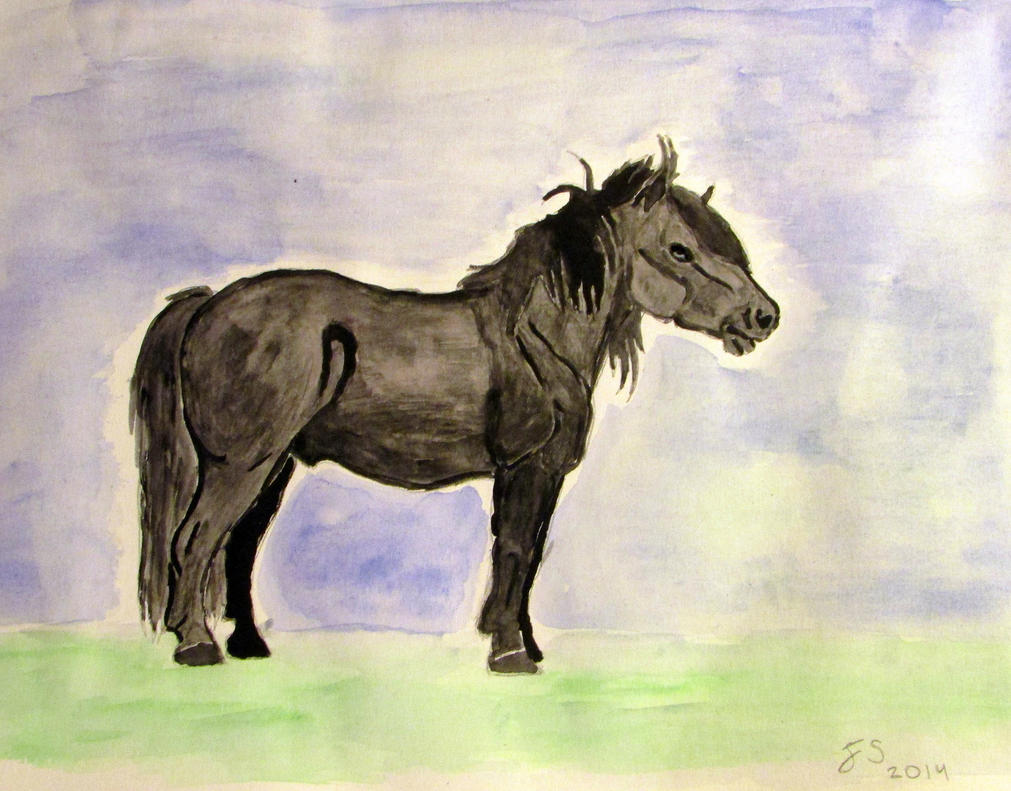 Shetland pony by Fsihi