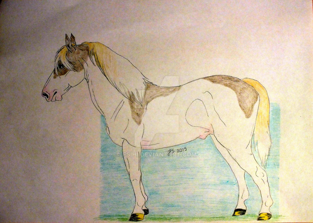 Pinto pony by Fsihi