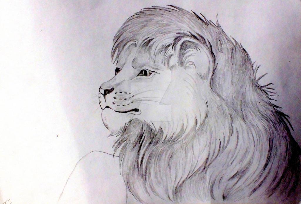 Lion by Fsihi